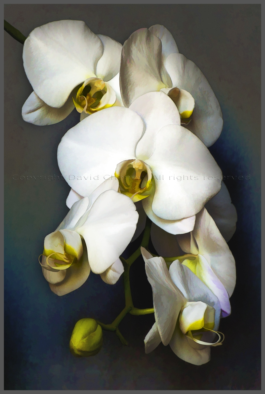 Orchid Interpretation 1